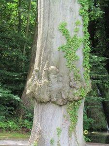Een boom met stress