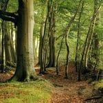 Wat je van bomen kunt leren voor teamwork