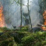 Hoe een bos teamgedoe oplost- 5 tips voor teamopbouw